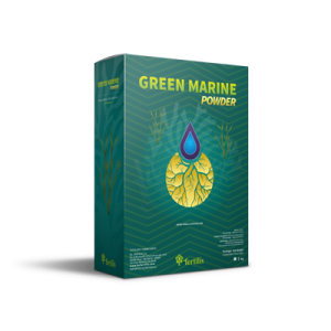 Green Marine Powder box